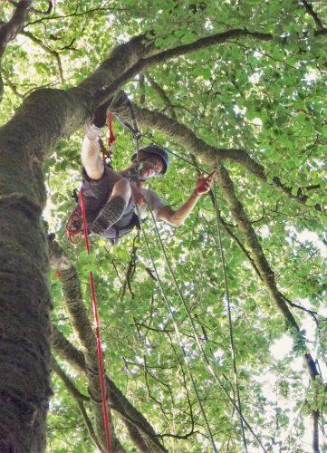 Installation des ancrages et des cordes dans l'arbre