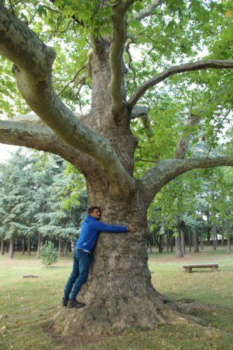 Pour l'amour de l'arbre !