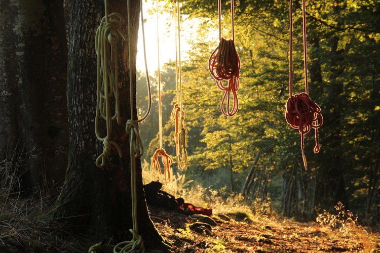 Cordes dans un arbre au soleil